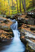 yellow maple trees with autumn mountain creek - stock photo