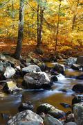 autumn creek with yellow trees - stock photo