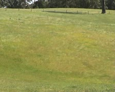 Field of grass with wind effect in Australia Stock Footage