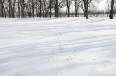 Snowy lane Stock Photos