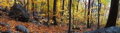 Stock Photo of autumn forest panorama