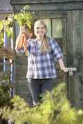 woman picking carrots on allotment - stock photo