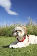 Small dog sitting on grass Stock Photos