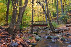 autumn wood bridge in yellow maple forest - stock photo