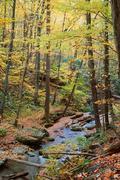 Stock Photo of autumn maple wood