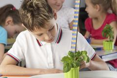 Boy learning about plants in school class Stock Photos