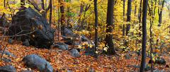 autumn woods panorama - stock photo