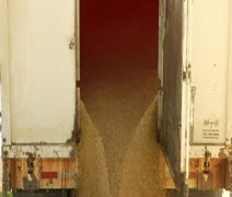 Slow motion of grain emptying from semitruck Stock Footage