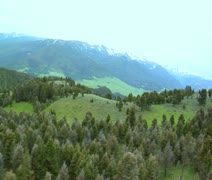 Aerial shot of pine trees and wildlife in mountains Stock Footage