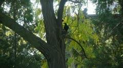 Bird in woods tree trunk. Stock Footage