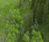 Aerial shot of elk in lush green forest Stock Footage