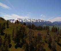 Aerial shot of Paradise Valley Montana, pines on grassy mountains Stock Footage