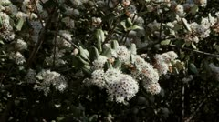 Bee in flowers in southern California mountains. - stock footage