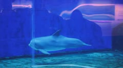 Dolphin swims in the tank of the acquarium Stock Footage