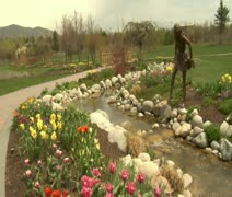 Crane shot up to Tulips to park Stock Footage