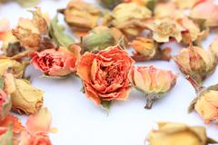 Beautiful dry roses Stock Photos