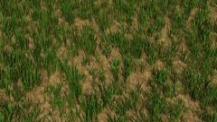 Watch the Grass Grow Stock Footage