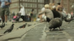 Amsterdam pigeons eating bread Stock Footage
