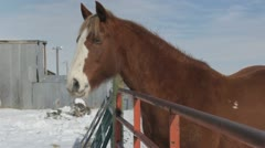 Horse being fed Stock Footage