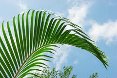Stock Photo of palm leaf on a background  sky