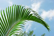 Stock Photo of palm leaf on a background  sky