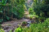 Stock Photo of tropical jungles of south east asia