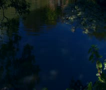 Tilt up from pond with lily pads to waterfall Stock Footage