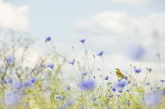 Small songbird in wild flowers Stock Photos