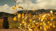 Stock Video Footage of slide rail shot of yellow aspen trees and mountains in autumn