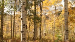 driving through Aspen Grove in fall - stock footage