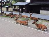 Protected deers on the streets of Nara, Japan Stock Photos