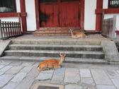 Protected deers in Nara, Japan Stock Photos