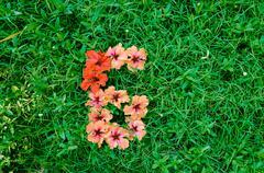flower alphabet: number 6 - stock photo