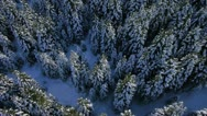 Stock Video Footage of AERIAL: Winter forest