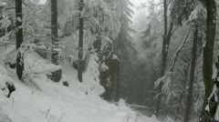 Deep Winter Forest in the german Harz Stock Footage