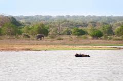 lake and wild animals in a reserve, sri lanka - stock photo