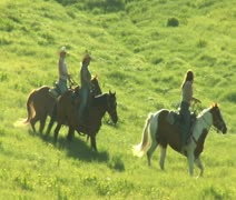 Three young women on horses trot across green meadow Stock Footage
