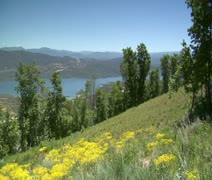 Mountain bikers zoon down hill with wildflowers Stock Footage
