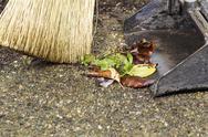 Sweeping weeds into dusk pan Stock Photos
