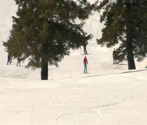 Skiiers pass through large pines at resort Stock Footage