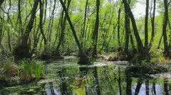 Spring flooded forest. Stock Footage