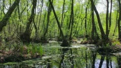 Spring flooded forest. Shot with slider. Stock Footage