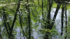Reflection of the spring forest in backwater. Shot with slider. Stock Footage