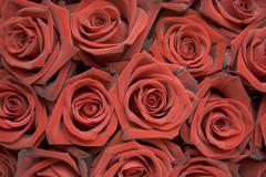 Rose Buds Stock Photos