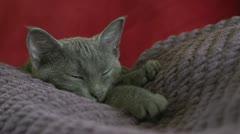 Kitten sleeping on person Stock Footage