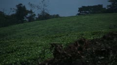 Two zoom outs over Gisovu Tea Plantation Stock Footage