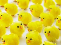 Abundance Of Easter Chicks - stock photo