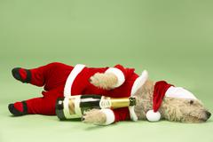 Samll Dog In Santa Costume Lying Down With Champagne Bottle Stock Photos