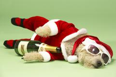 Samll Dog In Santa Costume Lying Down With Champagne and Shades Stock Photos