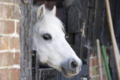 Pony Looking Over Stable Door Stock Photos